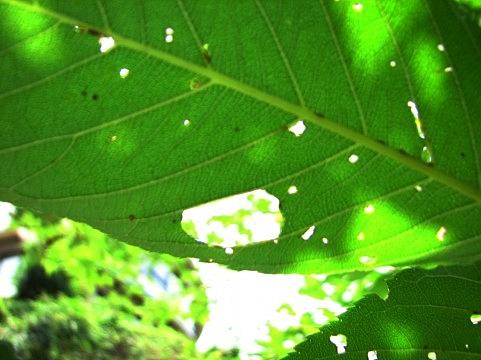 家庭菜園でできる農薬を使わない病害虫対策