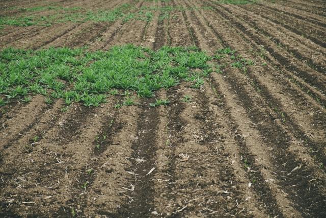 家庭菜園 雑草対策