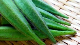 野菜の作り方 オクラの作り方