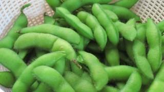 エダマメの作り方 エダマメの後に植える野菜は?