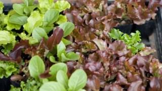 野菜の作り方 種から育てる?苗から育てる?