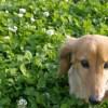 犬やネコのフンは肥料になるか?