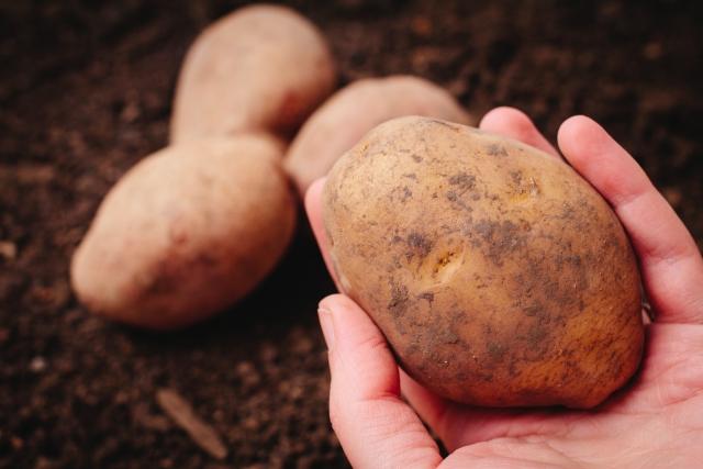 ジャガイモのおすすめの種類