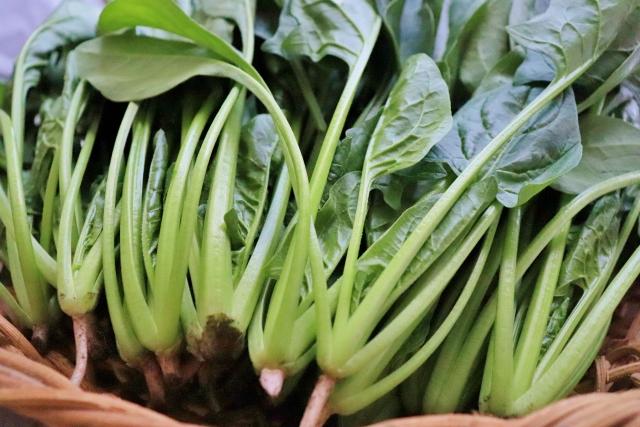 野菜の作り方 簡単おいしいホウレン草の栽培方法