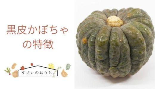 黒皮かぼちゃの特徴や旬の時期!味はくちどけがよい甘さ