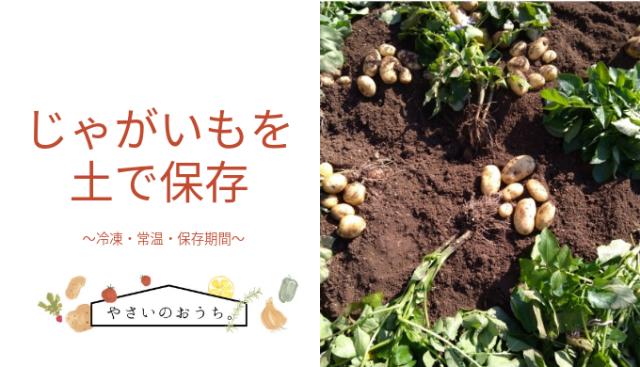 保存 ジャガイモ