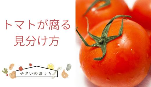 トマトが腐る見分け方 味や判断基準はどうなる?カビや腐敗の見極め、おいしいトマトの選び方も!