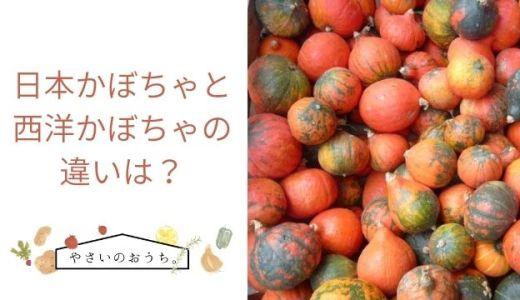 日本かぼちゃと西洋かぼちゃの違いは?味や見た目・調理法を比較まとめ!