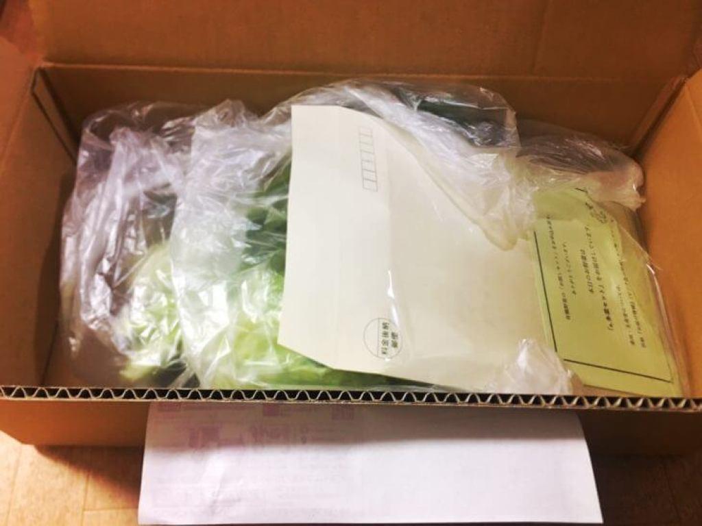 少量で配達してくれ、一人暮らしに向いている野菜宅配ビオ・マルシェのセット