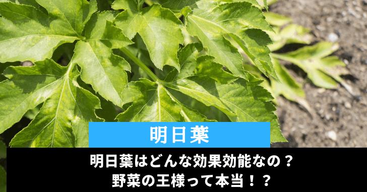 青汁の成分で有名!明日葉の栄養・効果効能を調査。野菜の王様!?