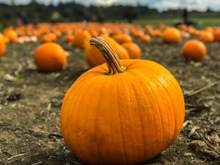かぼちゃの栄養素と効果効能を紹介!