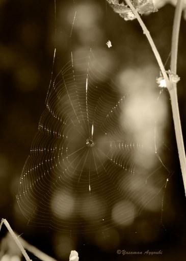 Spider-web 3