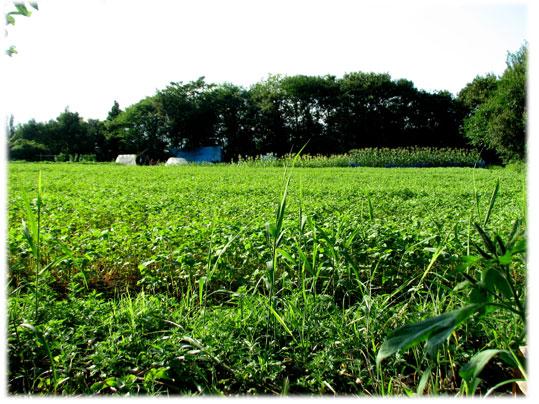 2010.8.13信濃町落合の畑