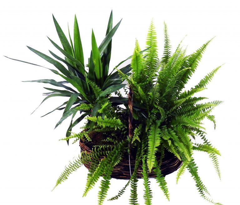 SEP S 01001 768x658 - سلة نباتات مشكلة كبير