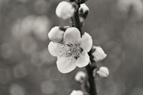 Пролетно боке