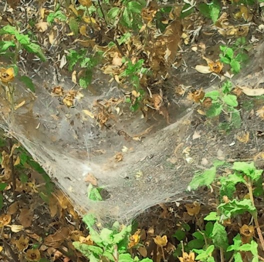 spider web photo illustration