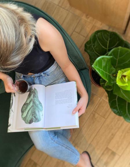 como escolher plantas para dentro de casa