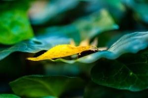 autumn-727446__340