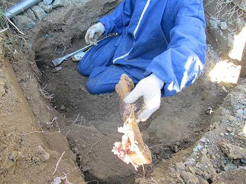 土葬の遺骨は大きくて重い | 散骨・粉骨・墓じまい NPO法人 ...