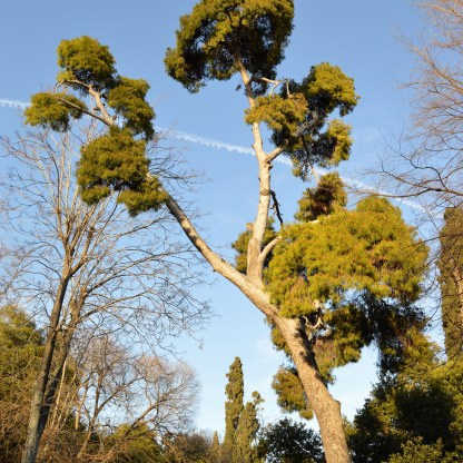 Trees at the National Gardens in Athens, Greece