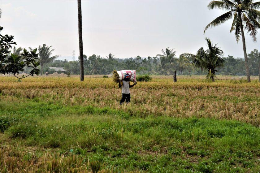 A farm in rural Bali, Indonesia