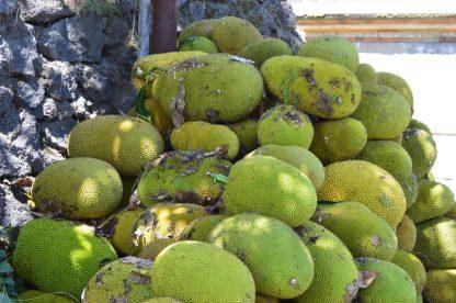 Pile of Jackfruits in Bali, Indonesia