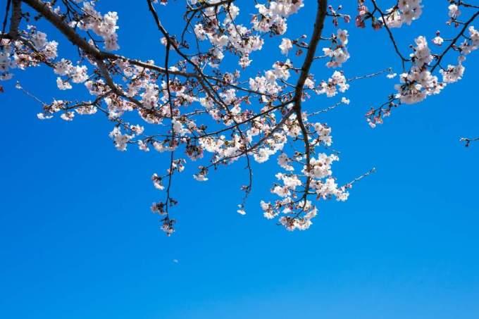 『春はあけぼの』原文/訳《シンプルでわかりやすい枕草子》