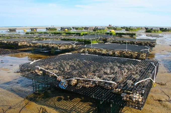 世界の水産物『養殖・生産量』国別ランキング