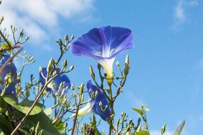 合弁花と離弁花の一覧と違いなどの要点まとめ