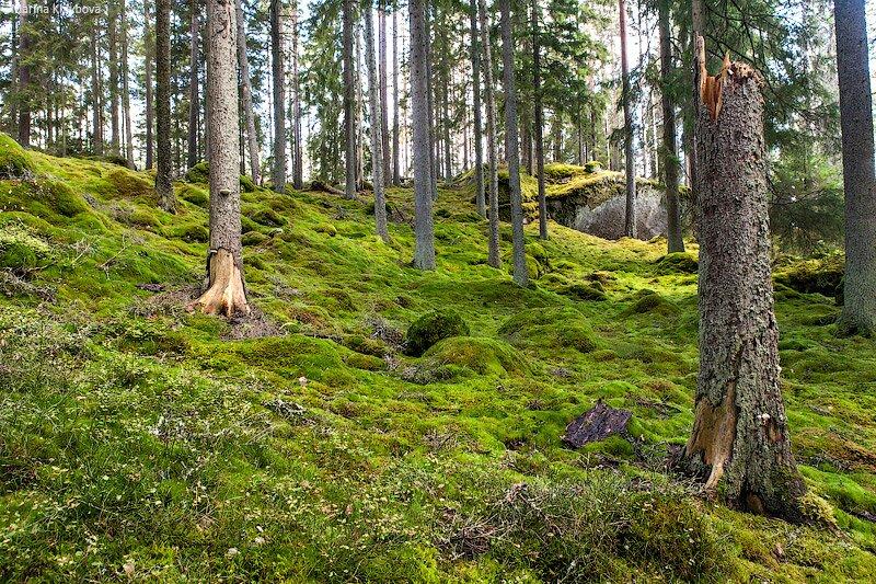 Национальный парк в Швеции