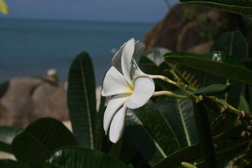 цветы, как женщины, созданы украшать планету