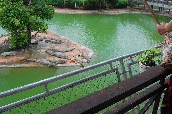 крокодилы, водопад Янг бей