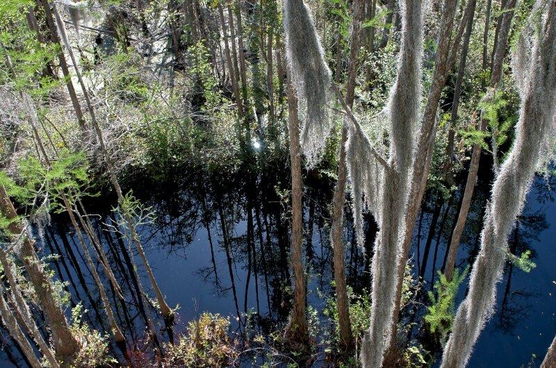 Вид на болота сверху