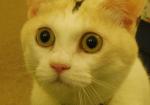 ゲオが凄いと驚く猫