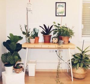 Bitkilerin Bildikleri Kitabı