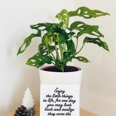 Bitkilerin Bildikleri