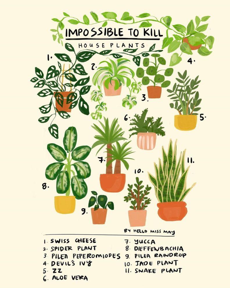 ldürmesi en zor ev bitkileri
