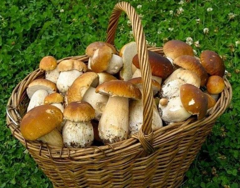Сбор грибов в соннике Ванги
