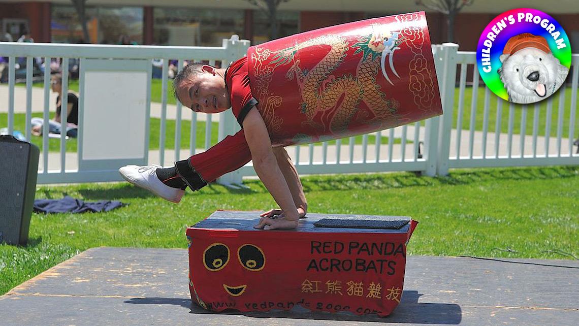 Photo of red panda acrobats