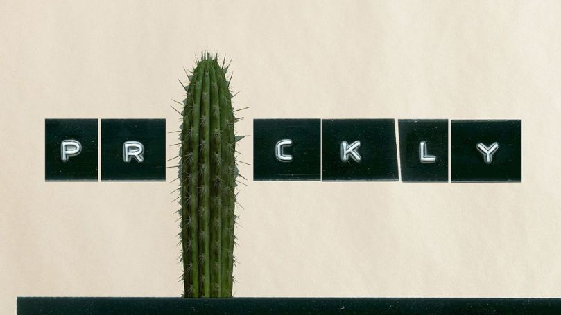 The word prickly is as spiky as it sounds, and such associations can help when learning languages (Credit: Javier Hirschfeld/Getty Images)