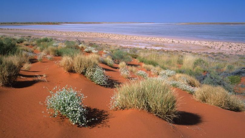 Australia's Great Sandy Desert is made up of spinifex grassland, salt lakes and endless red sand plains (Credit: Ted Mead/Getty Images)