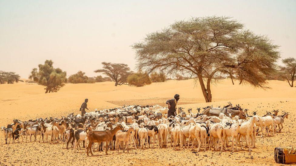 L'ère du commerce transsaharien a amené de nombreux groupes ethniques différents en Mauritanie (Crédit: Juan Martinez)