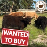 WANTED - White Cow