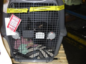 Nellie rattling around in the Monster Crate