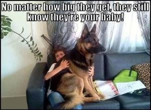 Funny Shepherd