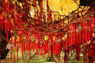ChengDu 139