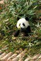 ChengDu 197