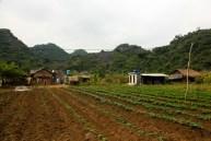 Crops on Cat Ba Island