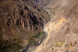 Colca-Canyon-16