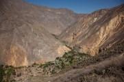 Colca-Canyon-32